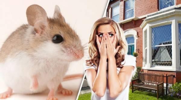 انشا با موضوع صحنه ورود یک موش به خانه