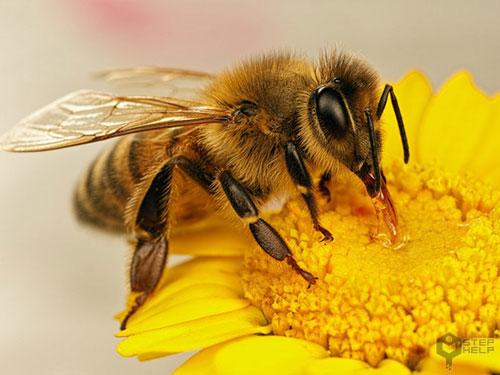 زنبور عسل چگونه به گرده افشانی کمک می کند علوم پایه چهارم