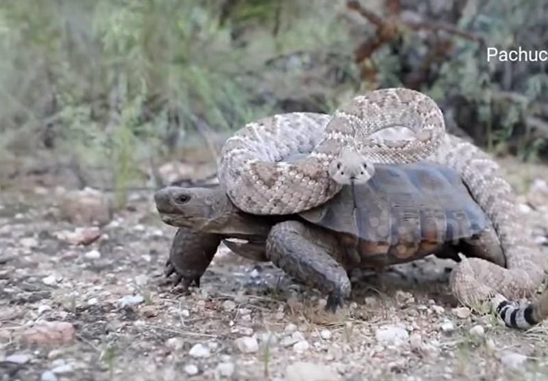 شاید تا به حال مار، مارمولک و لاکپشت دیده باشید چرا به این جانوران خزنده می گویند