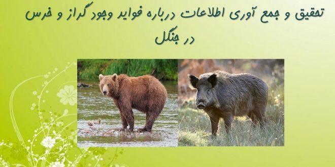 وجود گراز و خرس در جنگل فوایدی دارد در این مورد از منابع معتبر