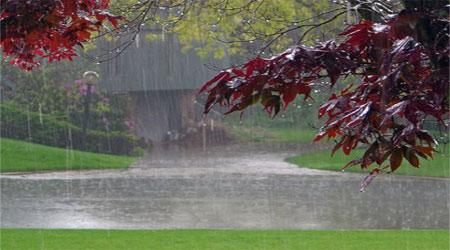 حس و حال توصیف بوی خاک پس از بارش باران