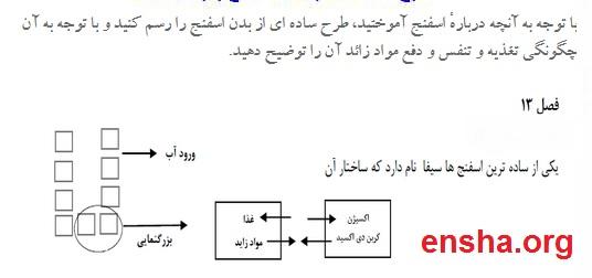 فعالیت صفحه 135 علوم نهم