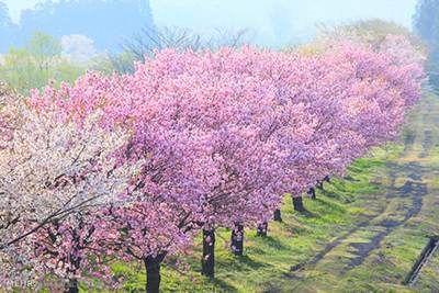 بهار و زیبایی های آن را با کلامی زیبا توصیف کنید صفحه 10 نگارش ششم